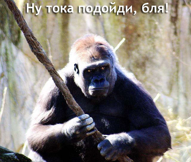 http://www.spynet.ru/images/2006/06/07/prikol/prikol_3.jpg