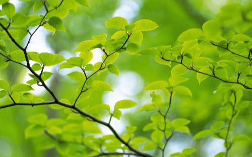 yeşil yeşil yapraklar