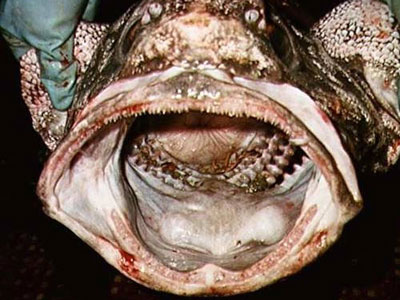 Глубоководные чудовища (41 фото)