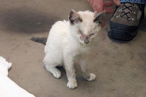 Люди подобрали раненого котенка (21 фото)