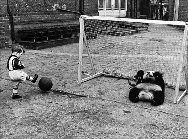 Лондонский довоенный зоопарк (17 фото)