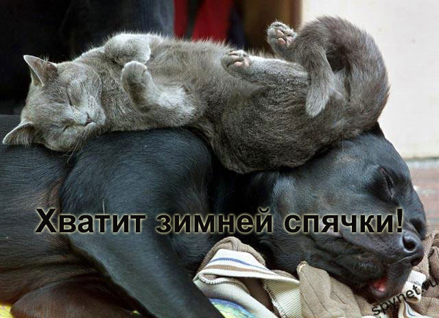 http://spynet.ru/images/2008/02/29/lastday/lastday_10.jpg