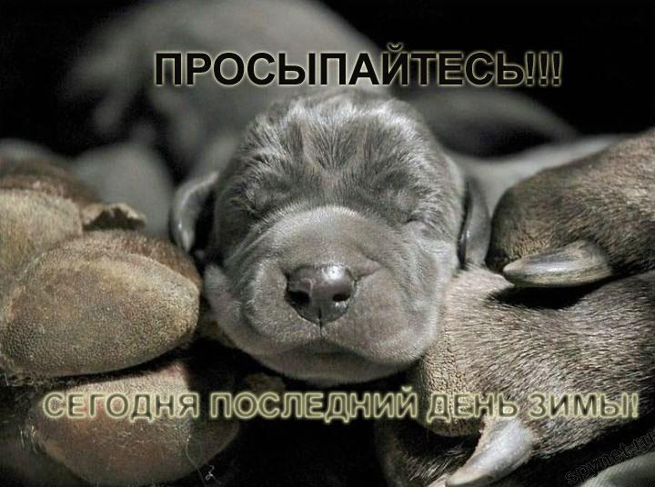 http://spynet.ru/images/2008/02/29/lastday/lastday_11.jpg