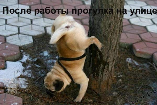 http://spynet.ru/images/2008/02/29/lastday/lastday_12.jpg