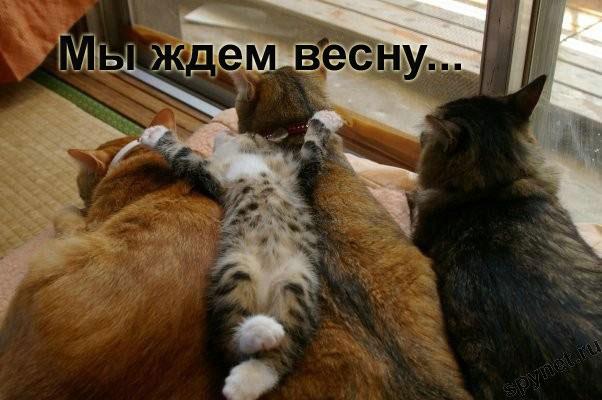 http://spynet.ru/images/2008/02/29/lastday/lastday_4.jpg