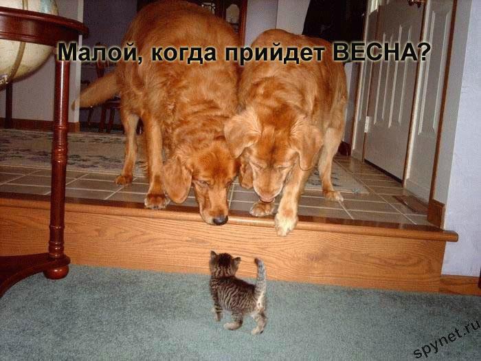 http://spynet.ru/images/2008/02/29/lastday/lastday_5.jpg