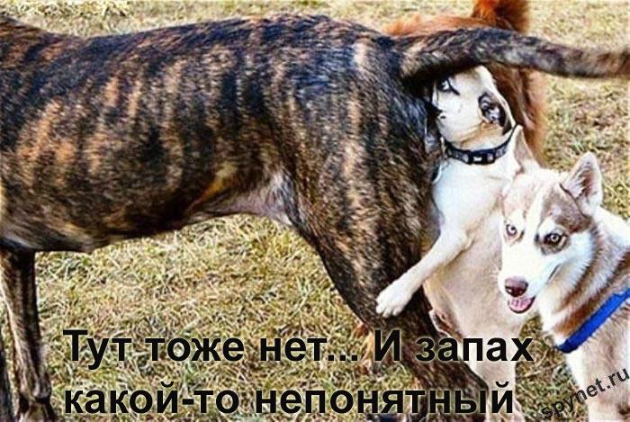 http://spynet.ru/images/2008/02/29/lastday/lastday_8.jpg