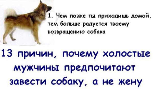 Почему собака лучше жены (13 фото)