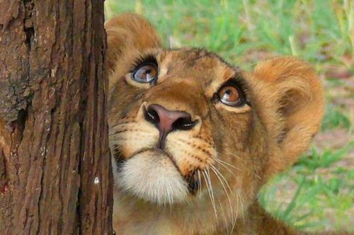 Эмоции животных 51 фото