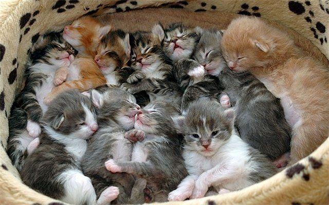 Прикольные коты 39 фото