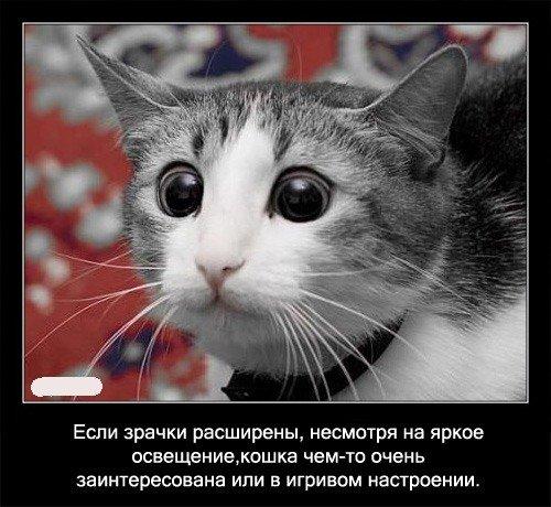 Интересные факты о кошках 56 фото