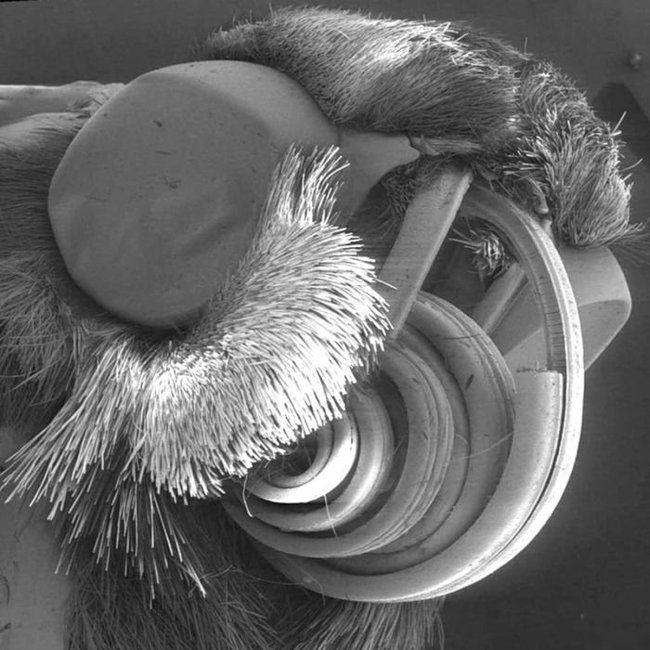 Микроб фото