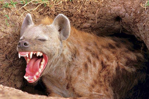Самые страшные животные (75 фото)