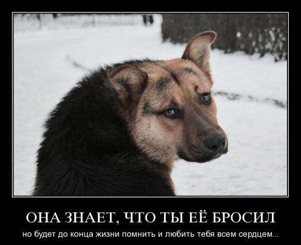 http://s.spynet.ru/images/2009/07/03/demotiv/demotiv_35.jpg