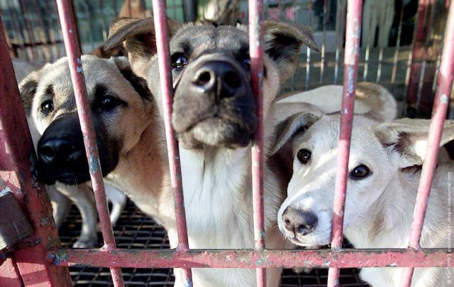 Собачьи рынки в Южной Корее (14 фото)