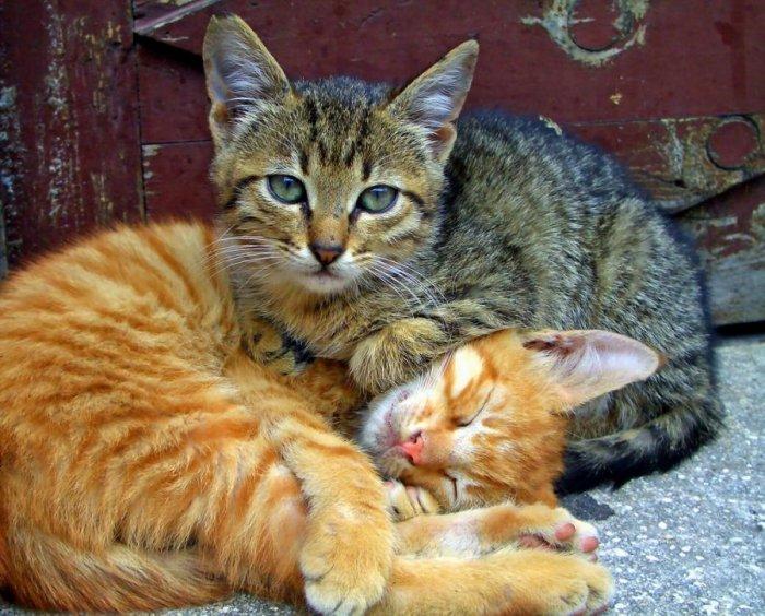 живые картинки кошек