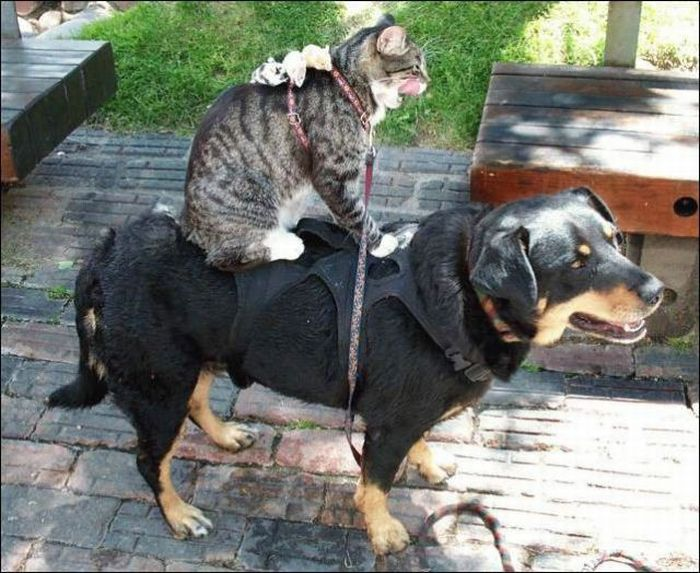Кошка и собака 55 фото