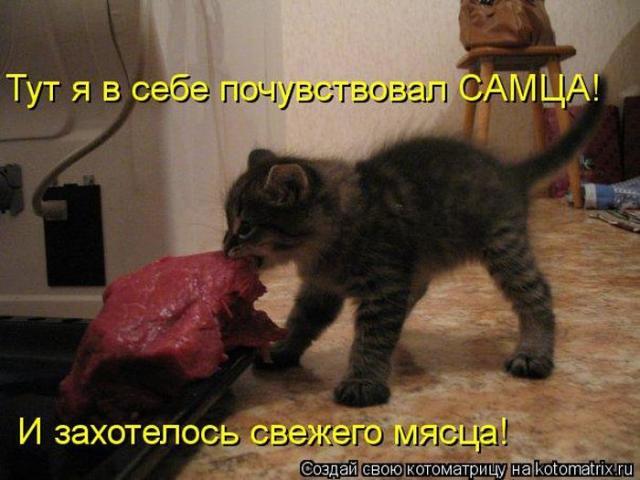 http://s.spynet.ru/tru/pics5/20121214/kotomatrix_38.jpg