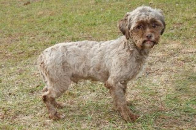 Необынчая морда собаки, похожая на лицо человека