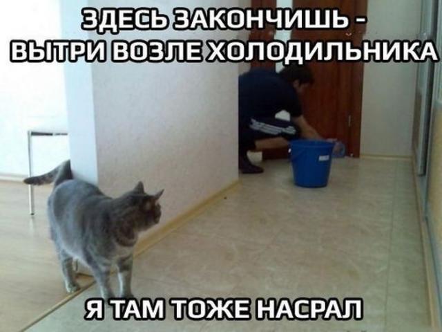 http://s.spynet.ru/tru/pics5/20140703/podborka_55.jpg