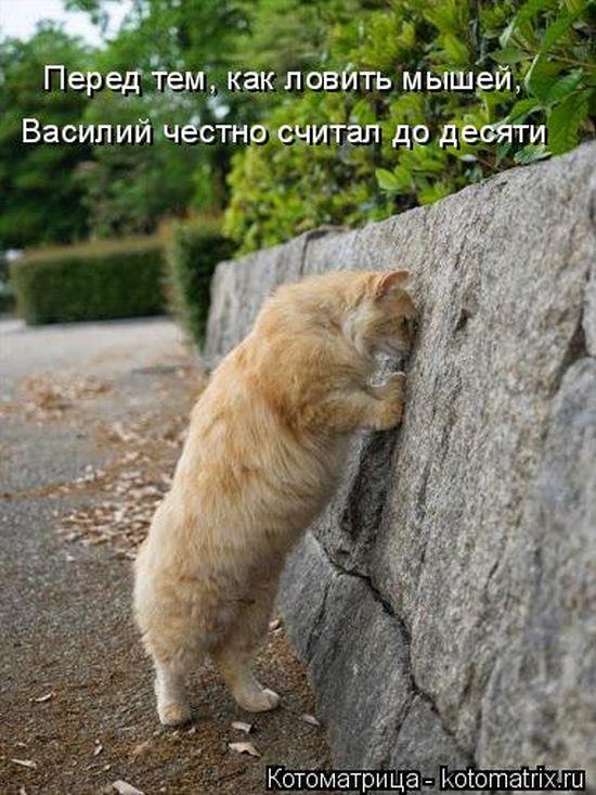 http://s.spynet.ru/tru/pics5/20141226/kotomatrix_40.jpg