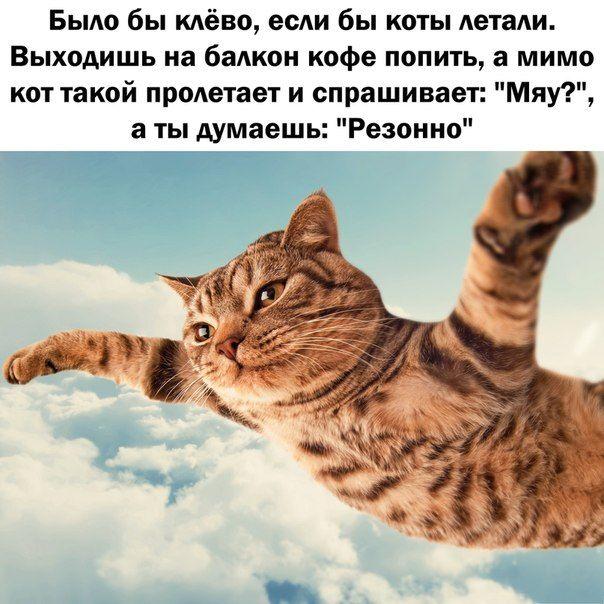 http://s.spynet.ru/tru/pics5/20150402/podborka_80.jpg