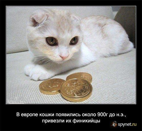 Вся правда о котах (56 фактов)