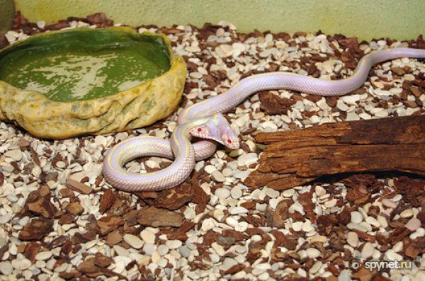 Рецепт змея с фото