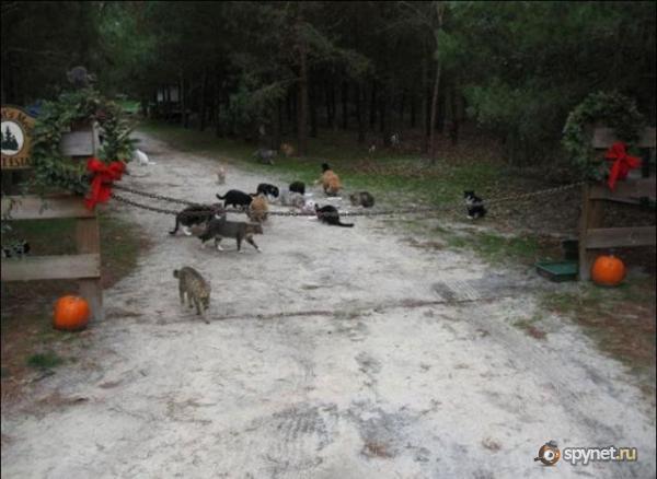 Рай для кошек (42 фото)