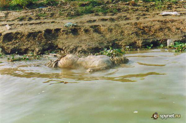 девушка моется на реке видео
