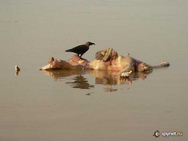 Священная река Ганг не для слабонервных