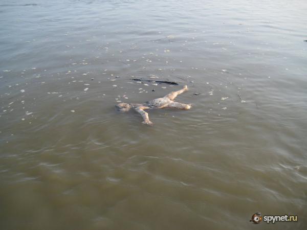 Девушка моется на реке видео фото 12-741