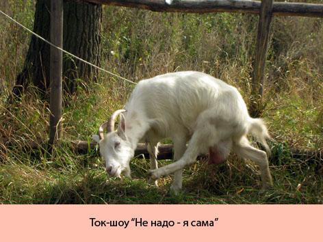 ... КАРТИНКИ ЖИВОТНЫХ С НАДПИСЯМИ: pictures11.ru/besplatnye-kartinki-zhivotnyh-s-nadpisyami.html