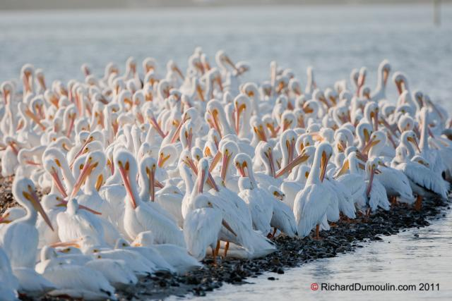 Животный мир. Птицы 37be479877