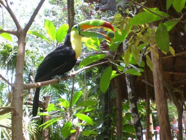 Животный мир. Птицы 439289384f