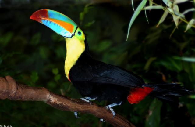 Животный мир. Птицы 785aa9ca5a