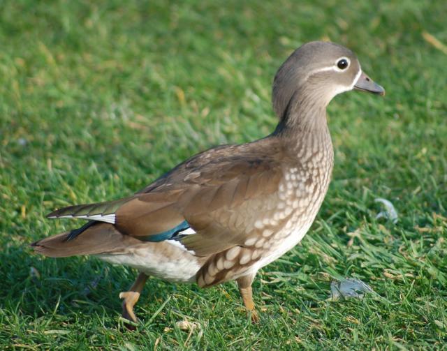 Животный мир. Птицы 8123921863