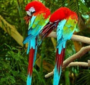 Животный мир. Птицы 876a50fa3c