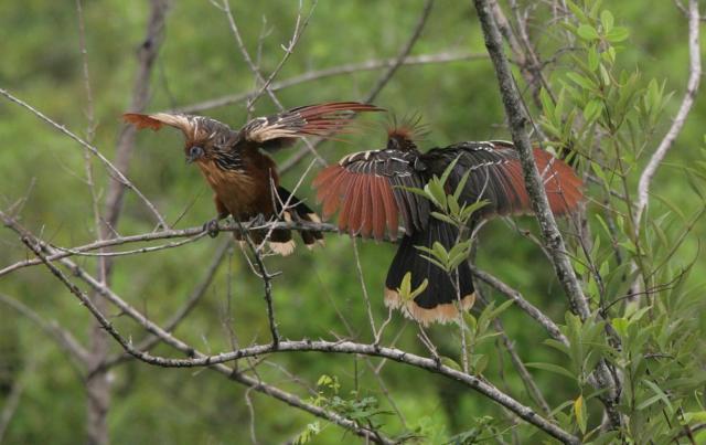 Животный мир. Птицы 8f1fc810ad