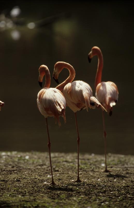Животный мир. Птицы 9d82bdcad6