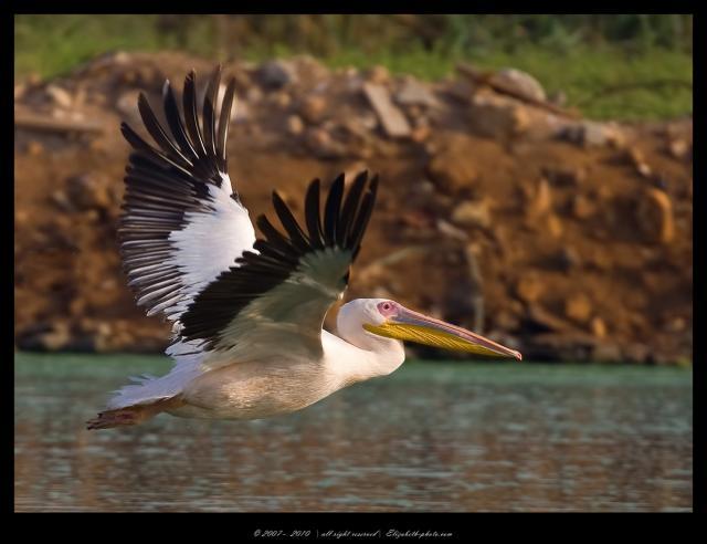 Животный мир. Птицы 9ff905f5b7