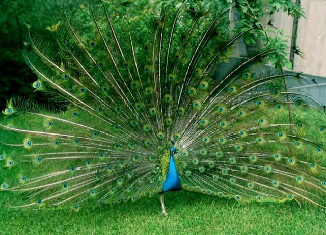 Животный мир. Птицы A506a1b5b7