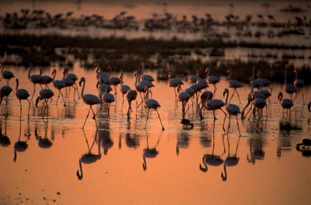 Животный мир. Птицы A58cb09991