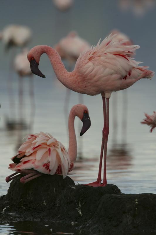 Животный мир. Птицы Cca6a3937e