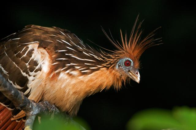 Животный мир. Птицы F26e9c68b2