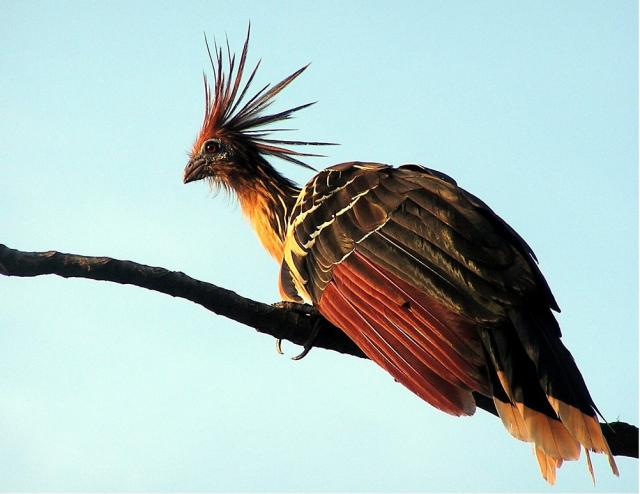 Животный мир. Птицы F4edebadb1