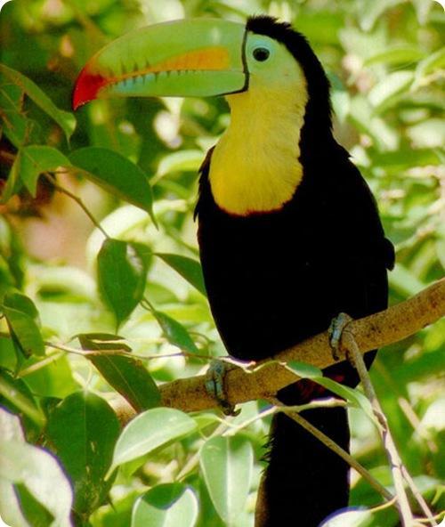 Животный мир. Птицы Fa95968140