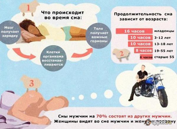 Факты про сон
