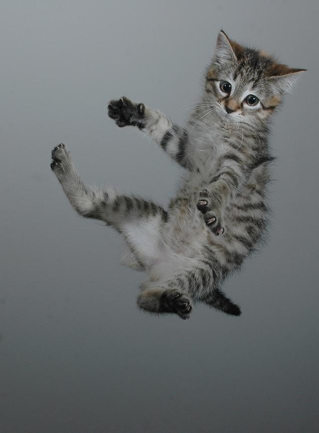 Коты!