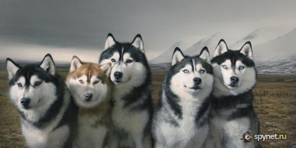 Классные фото собак